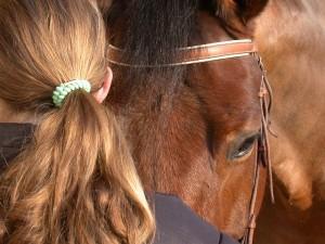 horse-91144_640